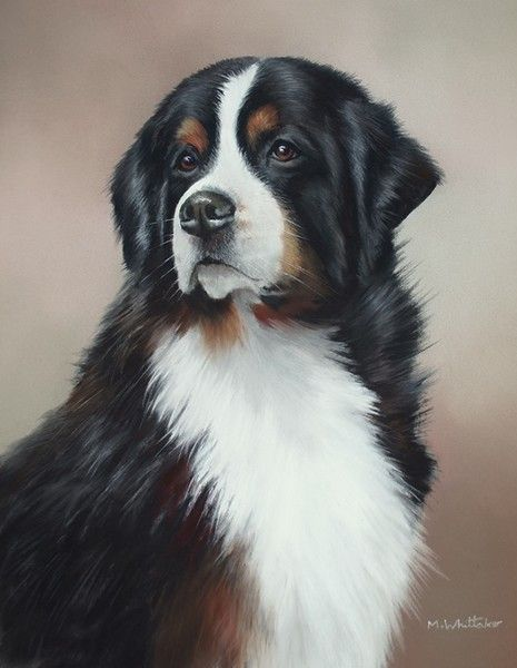 Bernese Mountain Dog By Mark Whittaker On Artwanted With Images Dog Portraits Art Dog Paintings Dog Drawing