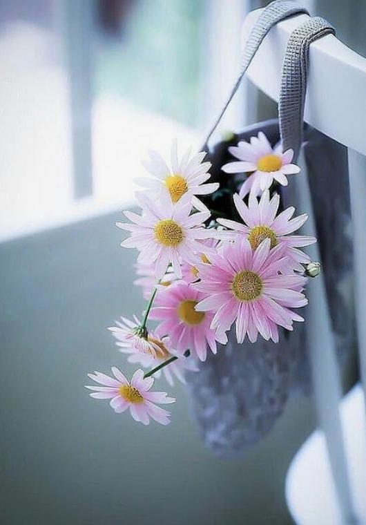 Ромашки, Цветы, Цветок