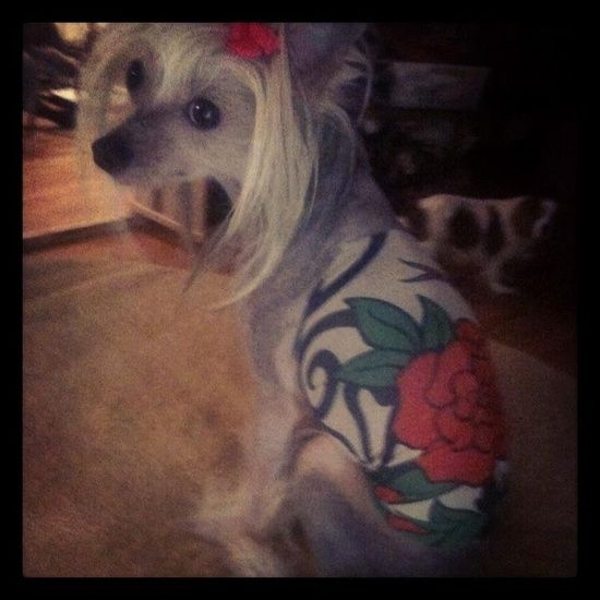 Tattoo Shirts Chinese Crested Costume Chinese People Eating Rats Zodiac Signs Tattoos On Pinterest Chinese Crested Chinese Picture Dog Grooming