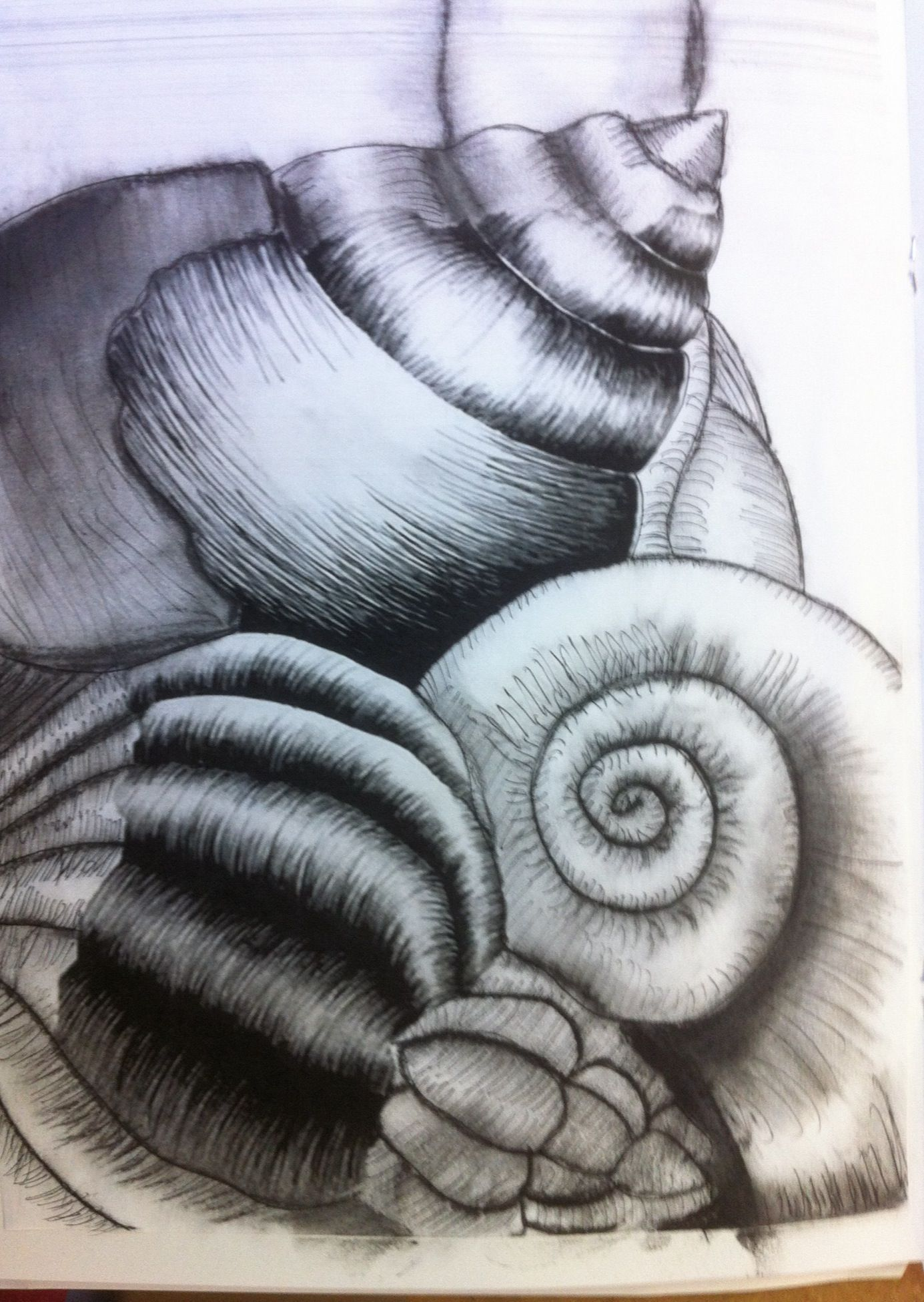 Pen Drawing If Shells By Y10 Student In 2019 Drawings