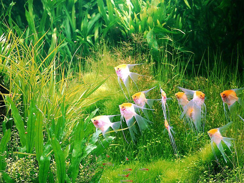 A Nature Aquarium by Takashi Amano