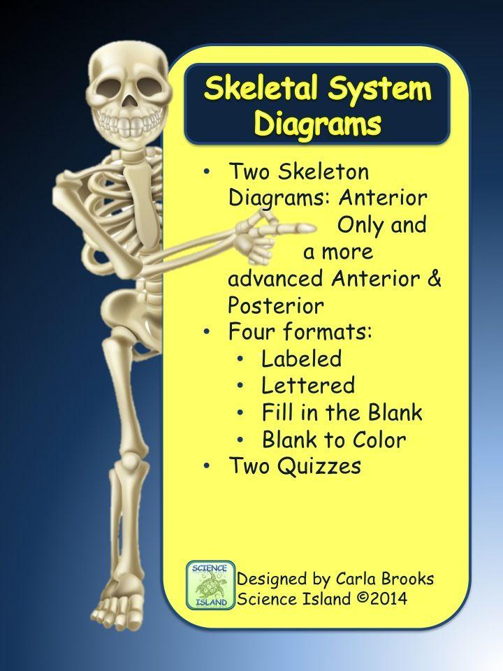 Skeletal System Diagrams - Study, Label, Quiz & Color | Diagram ...