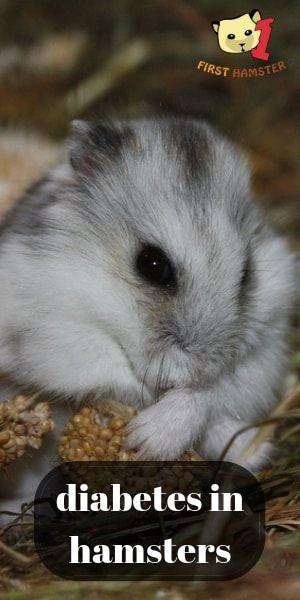 Pin on Small Pet Health Blogs | VET BLOGS | PET HEALTH ...