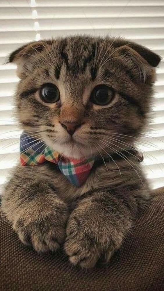 #giftsforcats