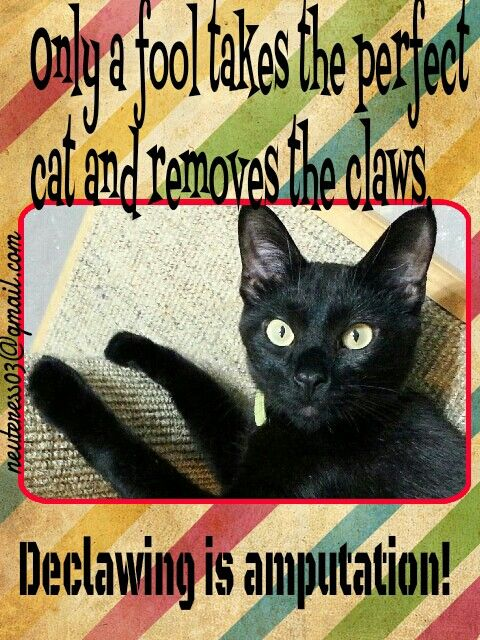 Anti Declaw Meme Memes Animals The Claw