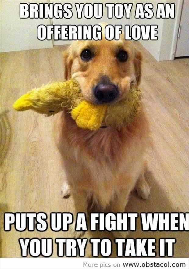 This describes all of my dogs.