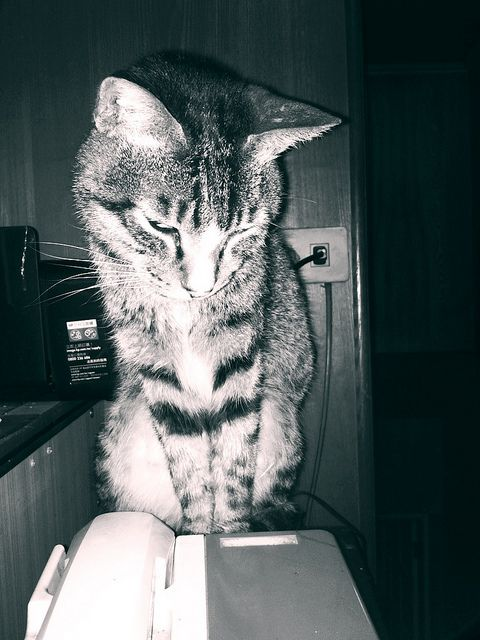 #BlackWhite #Cat