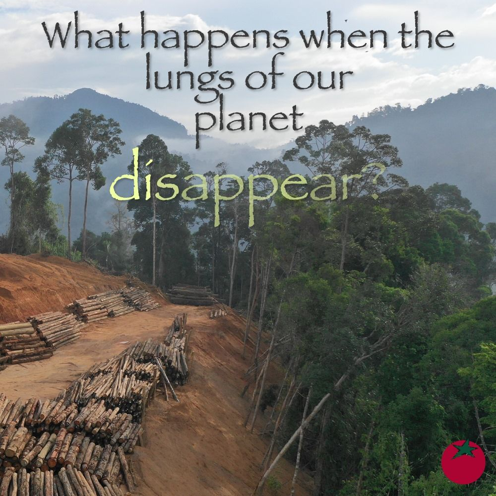 Amazon Watch What Happens When The Forest Disappears