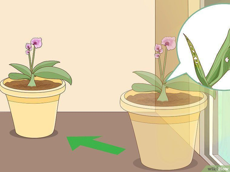 How To Revive An Orchid Plant 9 Steps With Pictures Wikihow Orchid Plant Care Orchid Plants Plants