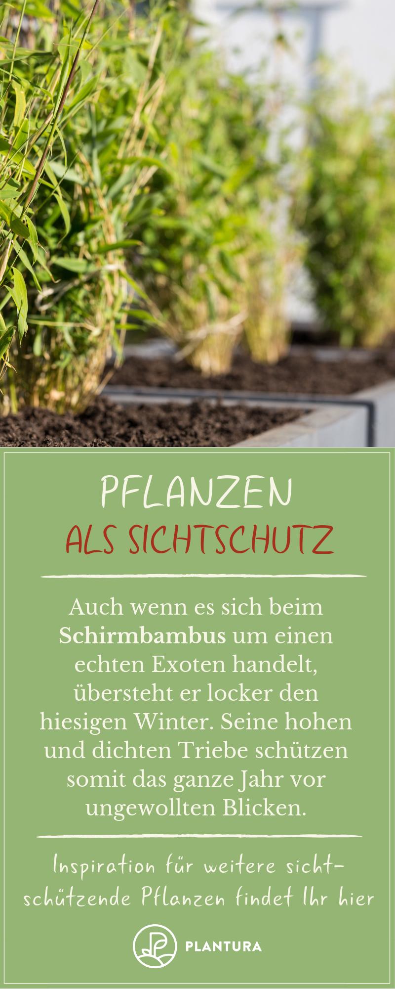 Pflanzen als Sichtschutz: Unsere Top 15 für Garten & Balkon - Plantura