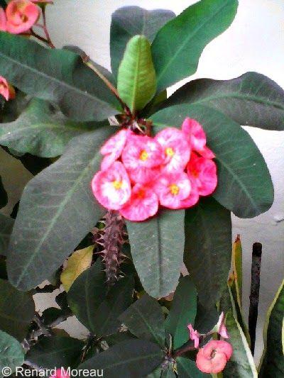 Another Beautiful Random Flora Snapshot