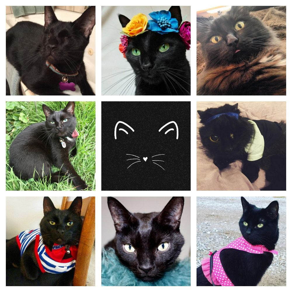 Which Black Cat Are You Take This Quiz To Find Out Black Cat Appreciation Day Black Cat Cats