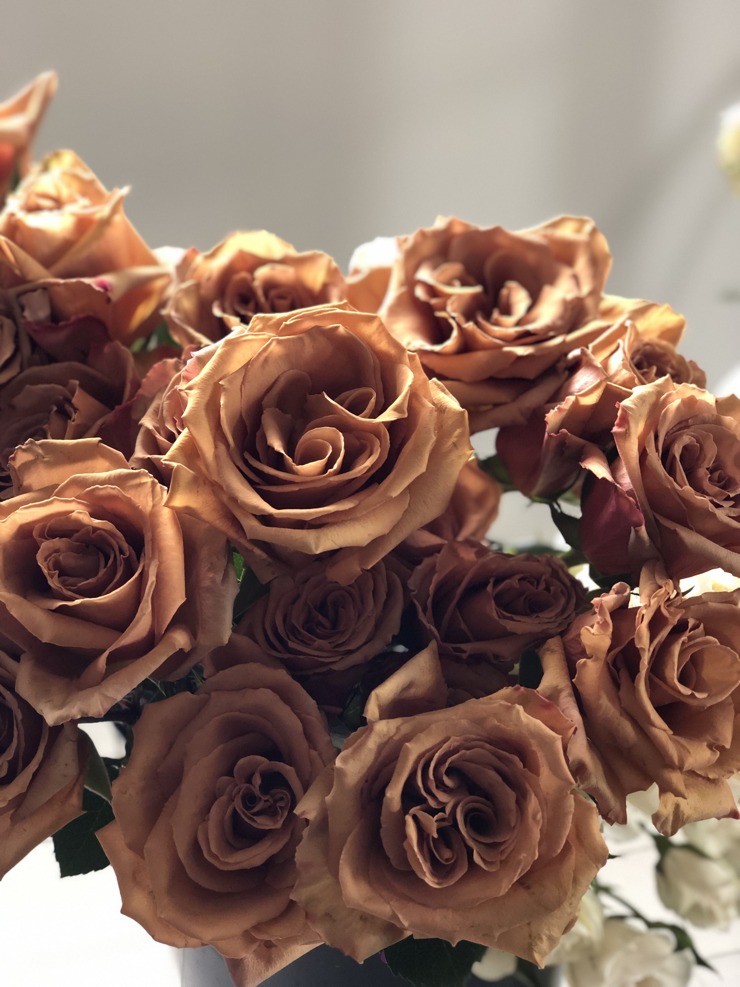 фейерверков коричневый цвет картинки цветы скаут