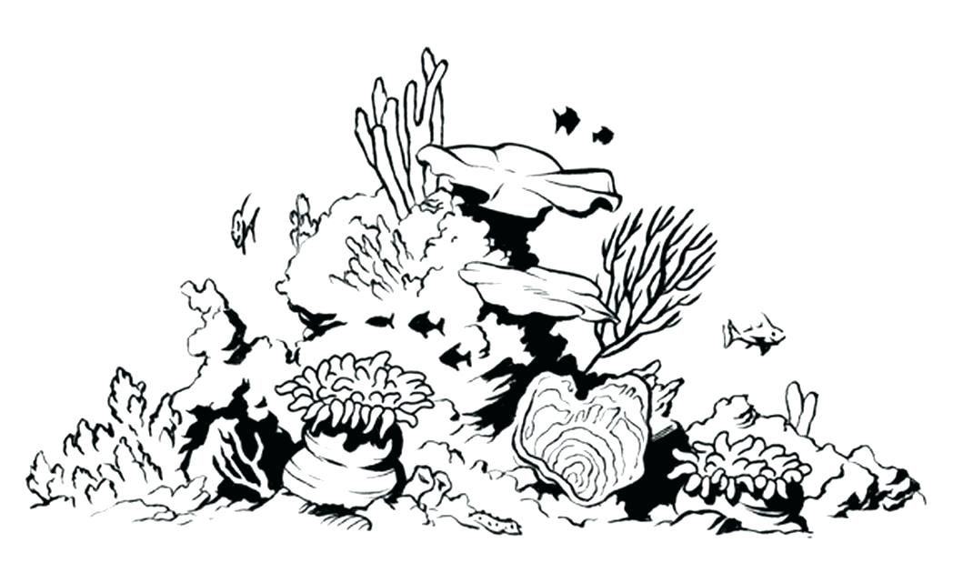 1048x641 Coral Reef Coloring Pictures Great Barrier Reef Coloring Pages Coral Reef Drawing Coral Drawing Coral Reef Art