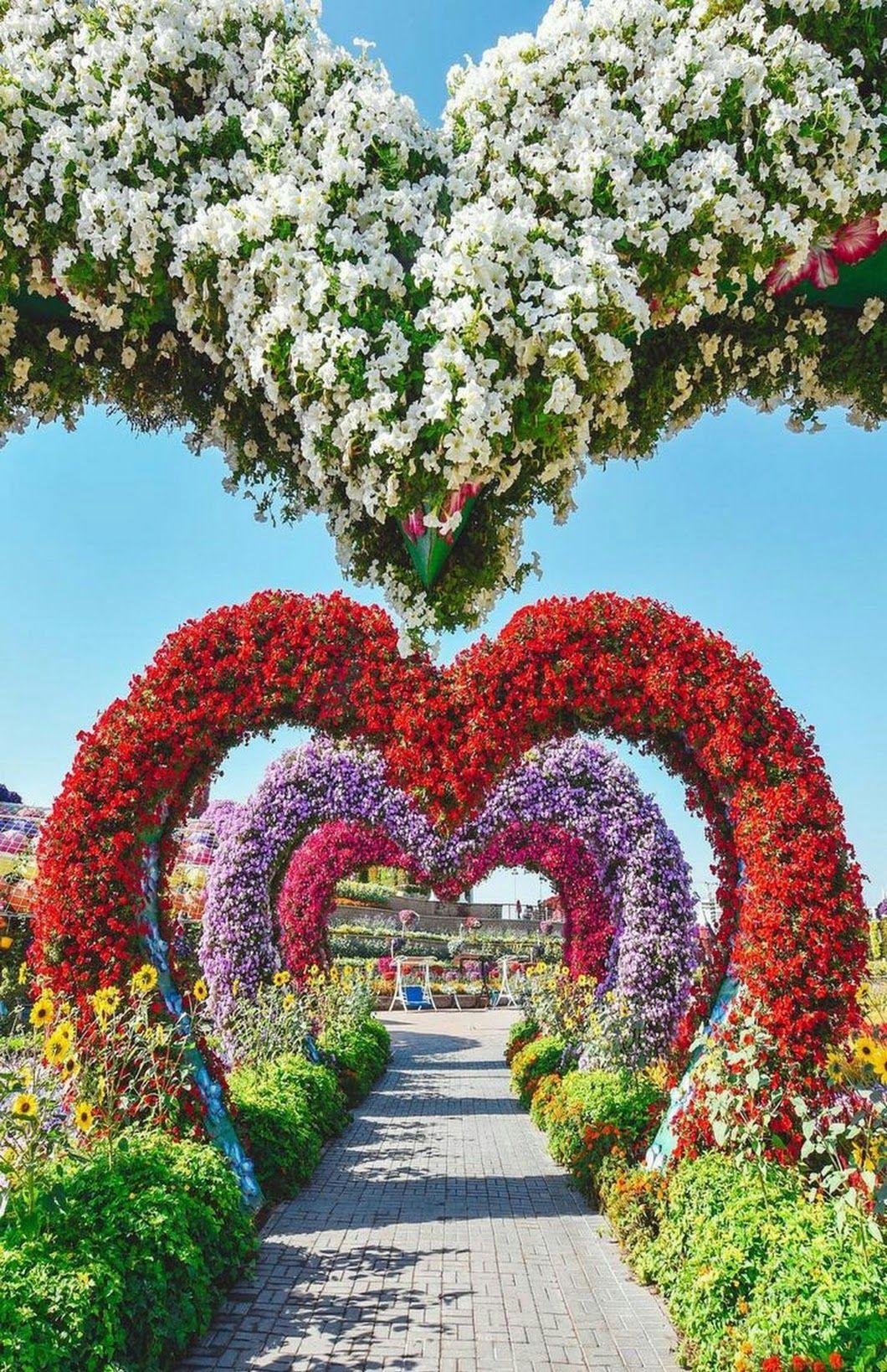 Priti Singh (With images) Miracle garden, Dubai garden