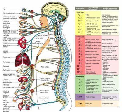 El cuadro clínico del síndrome del dolor en la espalda