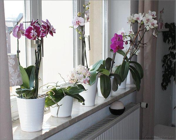meine orchideen ber der heizung blumen orchideen orchideen pflege und pflanzen. Black Bedroom Furniture Sets. Home Design Ideas