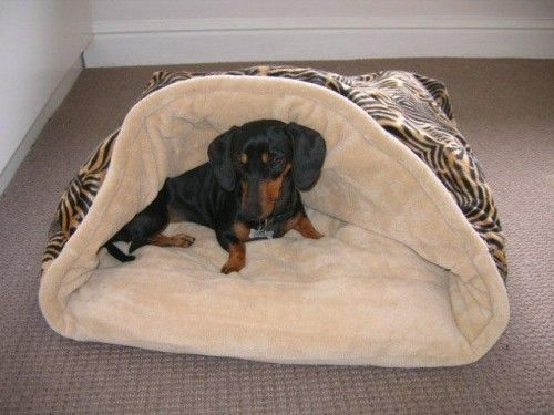 Dachshund Sack Beds Port Elizabeth Snuggle Buggle Dog Beds For