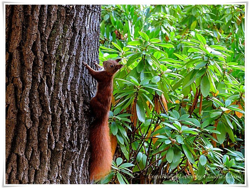 #EssenReisenLeben #Eichhörnchen #Herbst