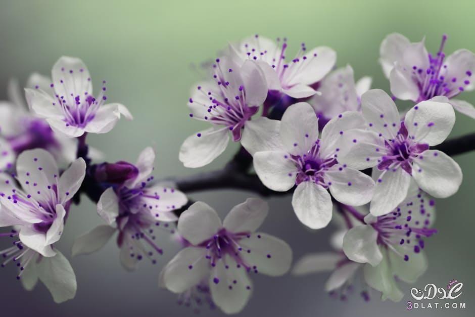صور ازهار الربيع 2019 صور ورود الربيع اجمل صور الورود صور زهور جميلة Flowers Photography Flowers Purple Flowers