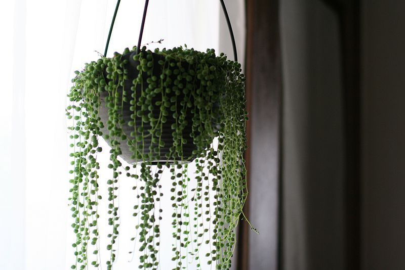 magical hanging plant thing