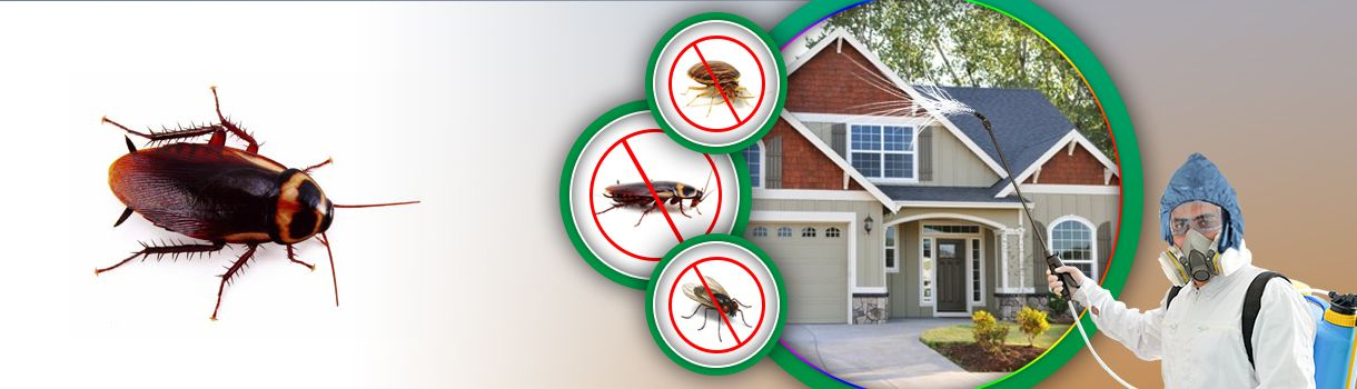 Pest Control Tunbridge Wells Recommends You Call Them As Soon As You See Signs Of Any Pest Infestations It Provides A Pest Control Services Pest Control Pests