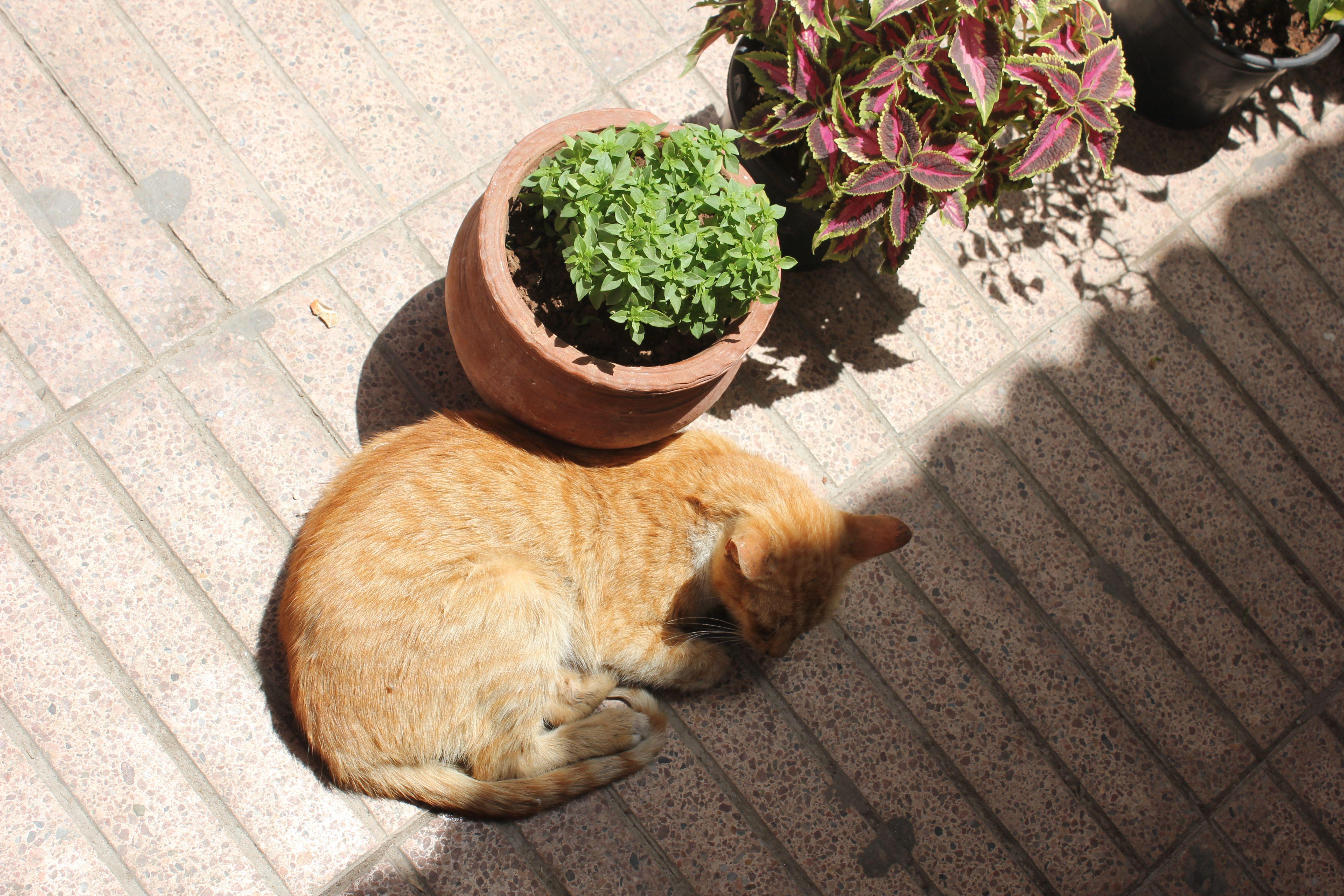 Amongst the plants