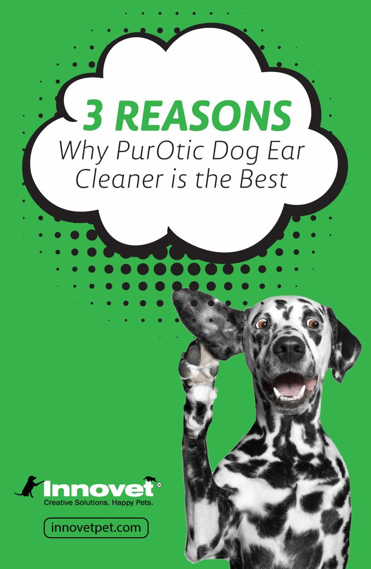 3 reasons why purotic dog ear cleaner is the best dog