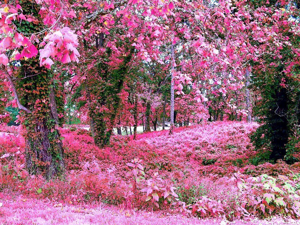 A Beautiful Really Pink Garden