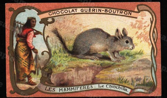 19th Century Original Animal  trading card  by Printvilla4you