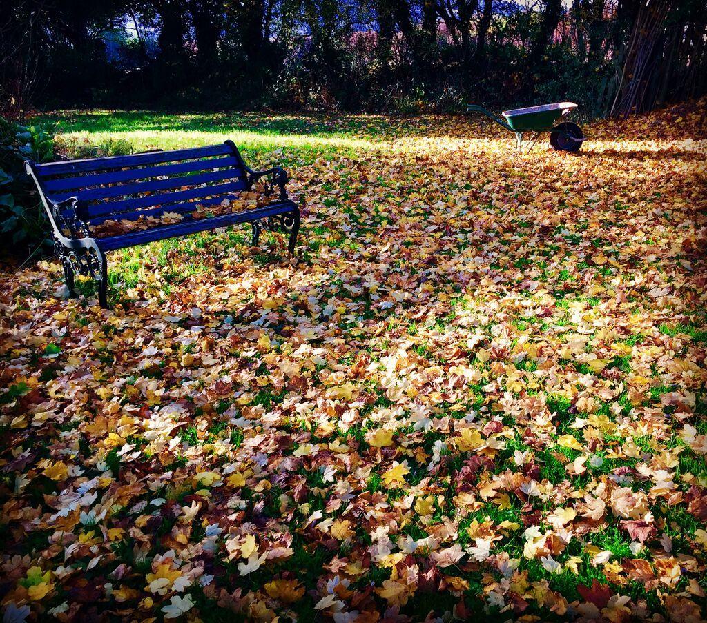 Falling leaves in my garden.