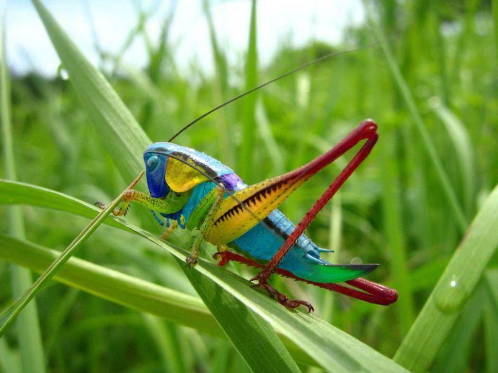 картинки про разных насекомых сочные сладкие