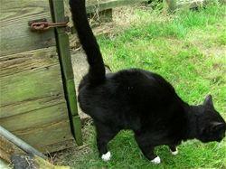 Cat Urine Marking His Territory