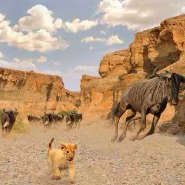 What Real Lion King Scene Stampede In The Gorge
