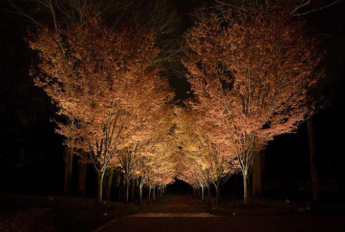 Janet Lennox Moyer | landscape lighting designer - Janet Lennox Moyer Landscape Lighting Designer Lighting-Trees