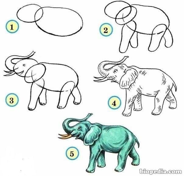 Resultado De Imagen Para Celula Animal Para Dibujar Facil Dibujos