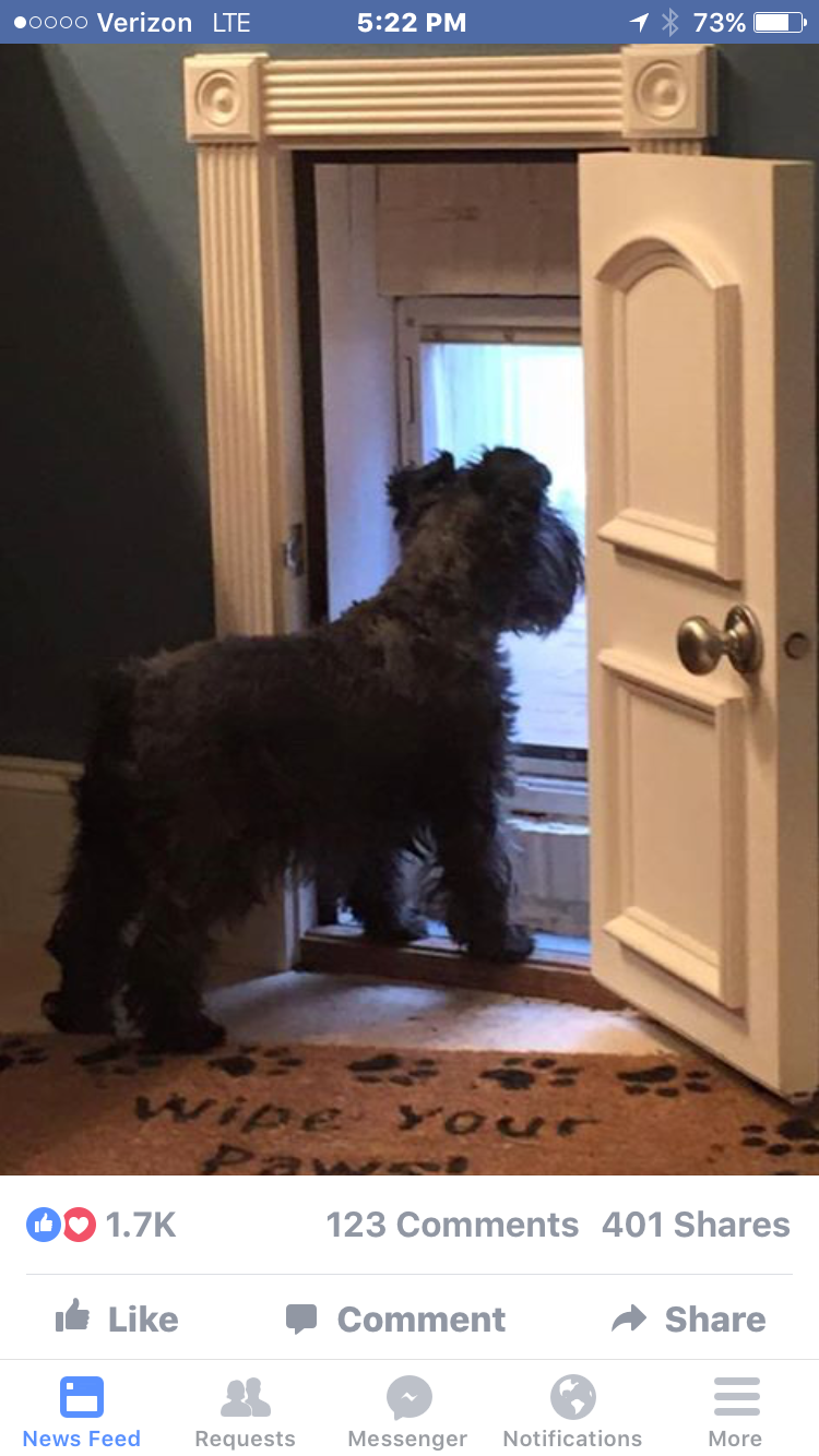 What A Cute Doggie Door And Secure When On A Vacation Love It