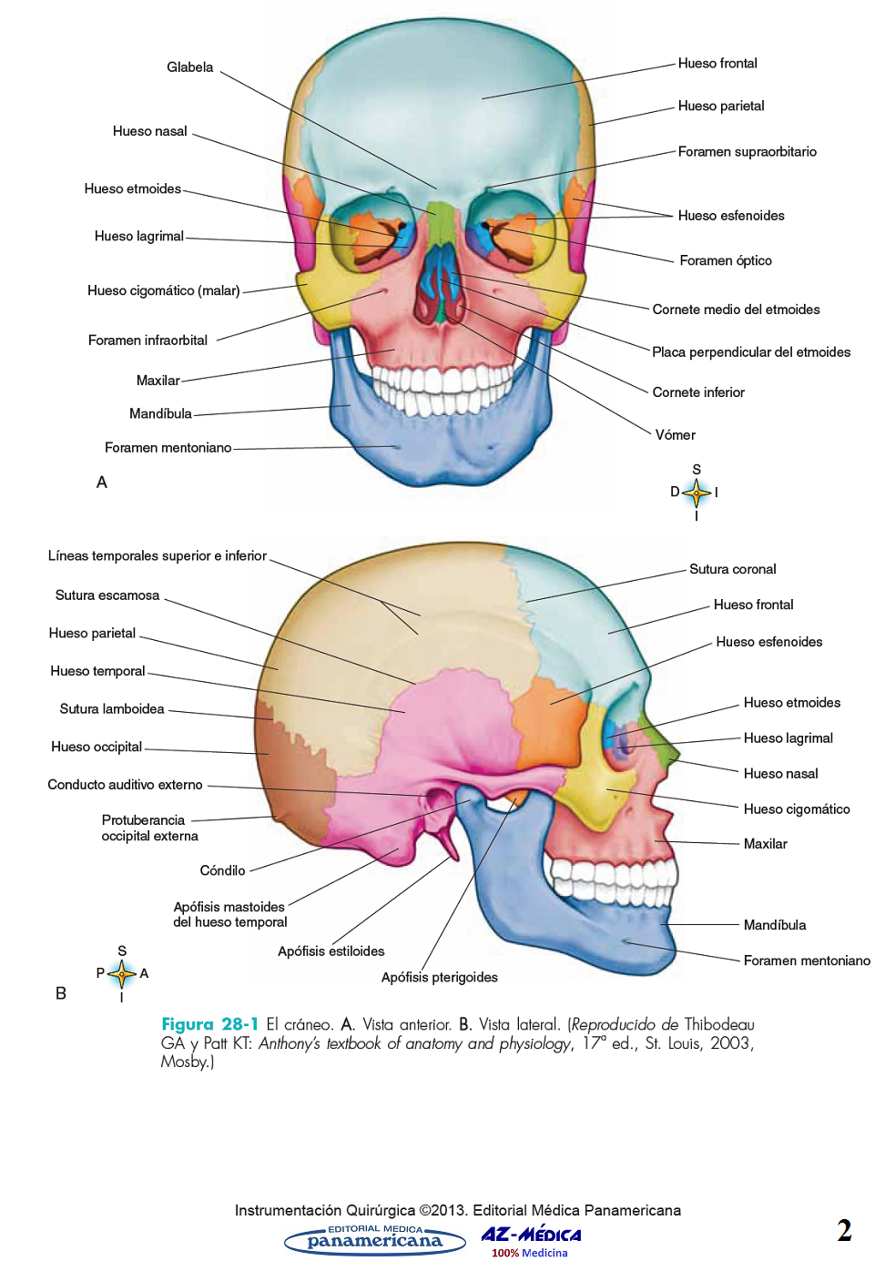 Libreria AZ-Médica - Cirugía Bucal y Maxilofacial | ANATOMIA ...