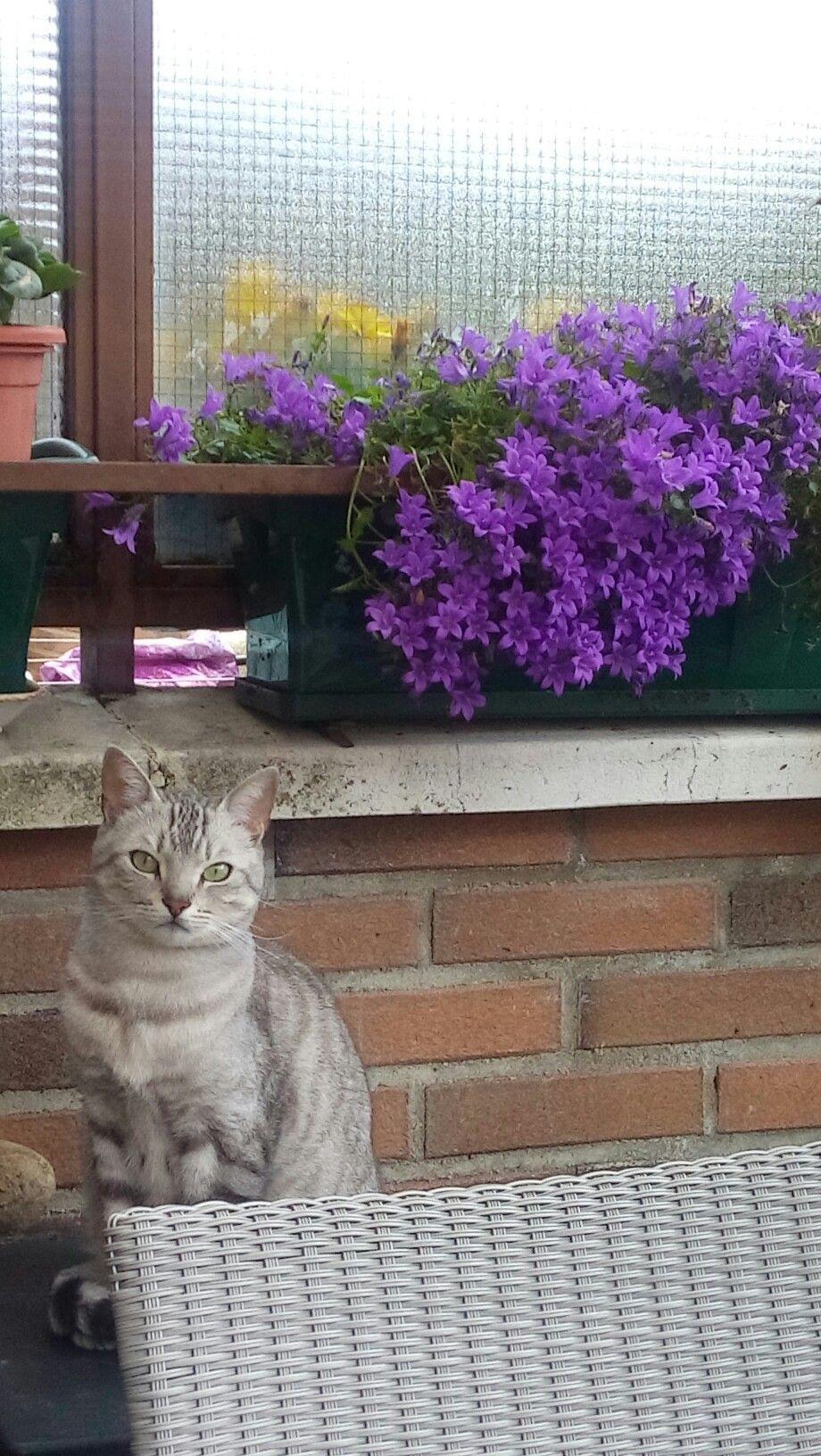 Esas flores son tu traje Master Gato.