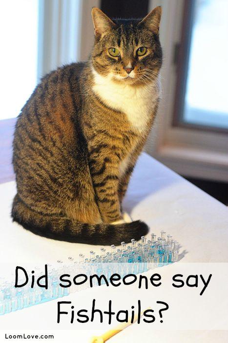 How Do You Make A Rainbowloom Cat