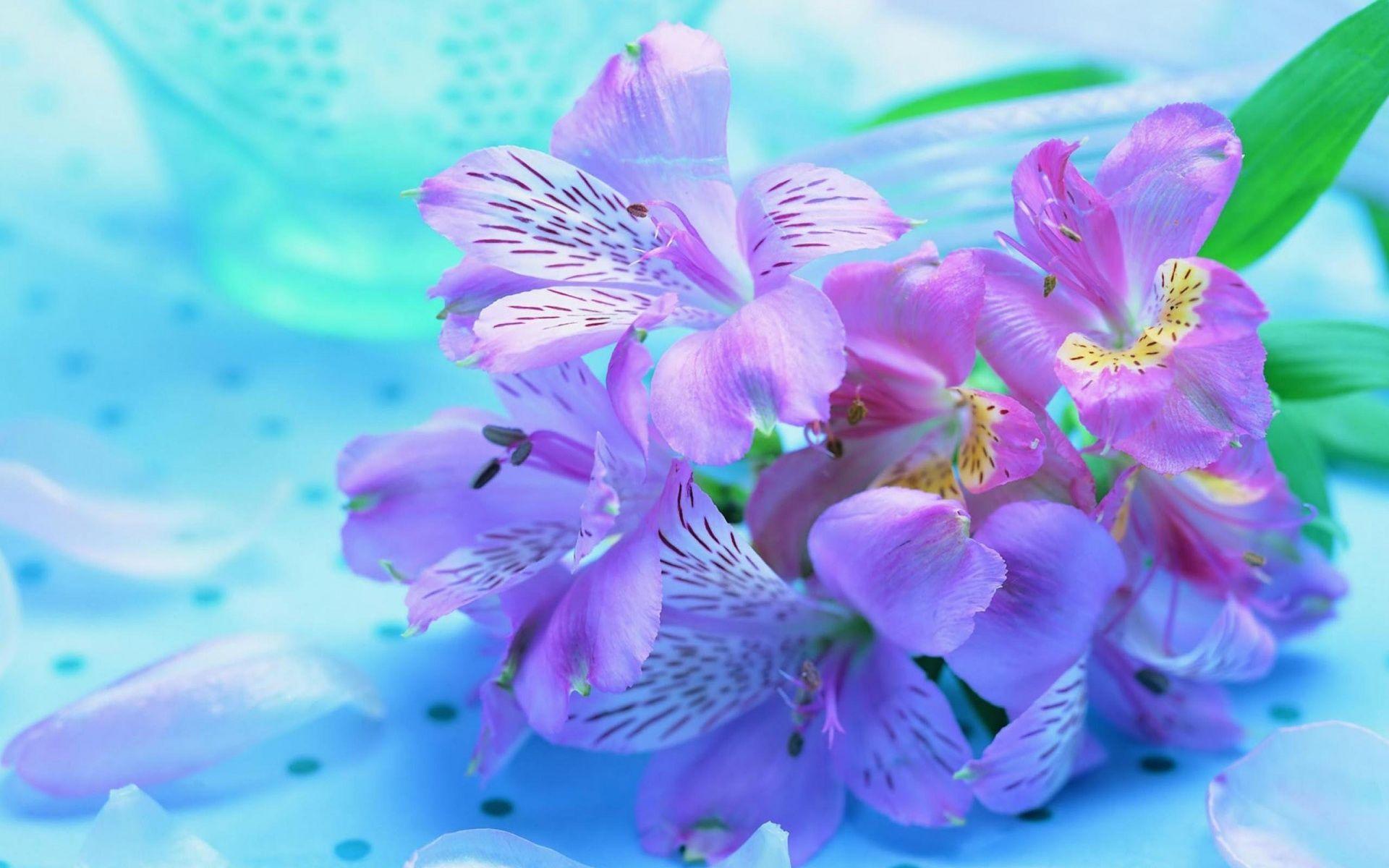 Pretty Flower pretty flower wallpaper full hd #rls | earth | pinterest | flower