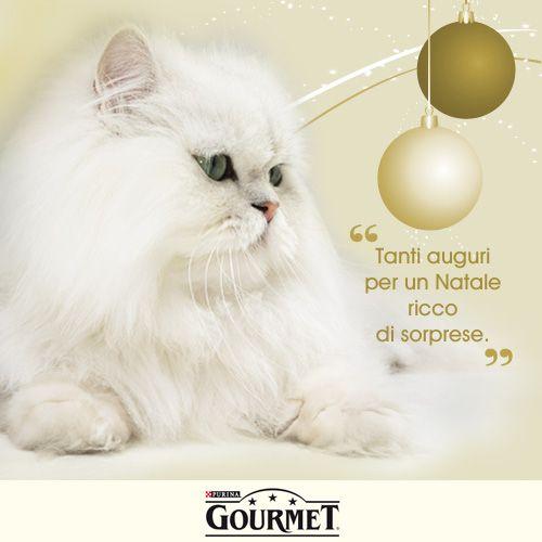 Gourmet 1 (500×500)