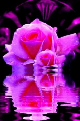 Hot pink rose live wallpaper for android pink things and images hot pink rose live wallpaper for android altavistaventures Image collections