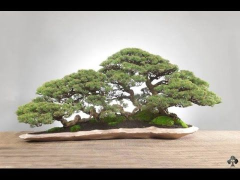 How To Make Pots For Penjing Mountain Landscape Bonsai Youtube Juniper Bonsai Bonsai Forest Bonsai