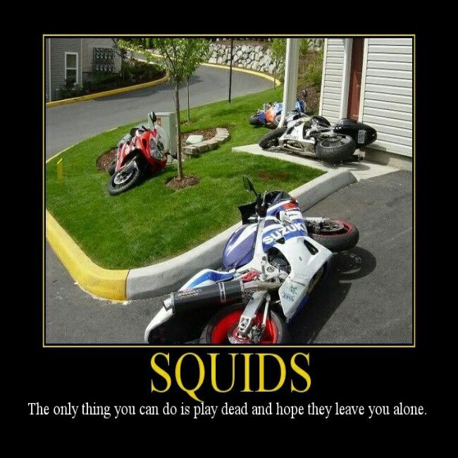 f137eb58c Oops, motorcycle, sportbike, squids | Quotes - Motorcycle ...