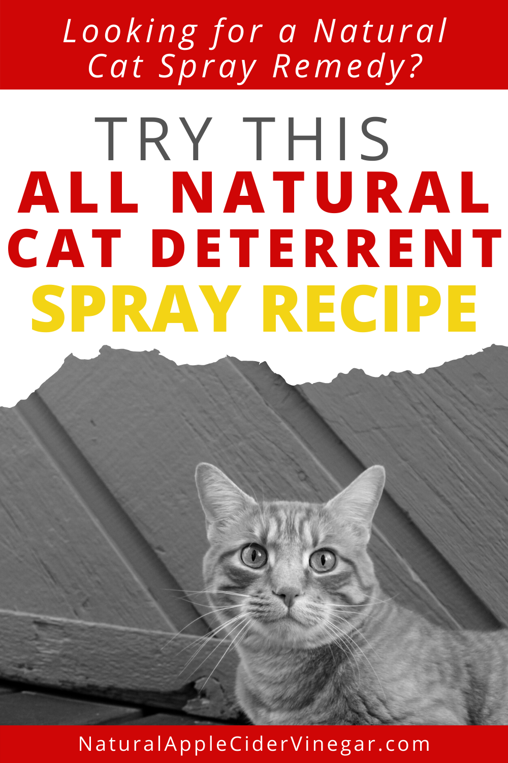 The Best All Natural Cat Deterrent Spray Recipe in 2020