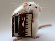 One mouse with accordeon.