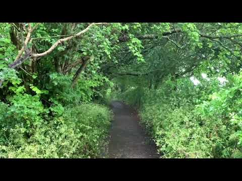 13 Rainy Day Path In Glastonbury Gentle Rain Falling Through The Leaves Soothing Sounds For Sleep Youtube Soothing Sounds Glastonbury Nature Sounds