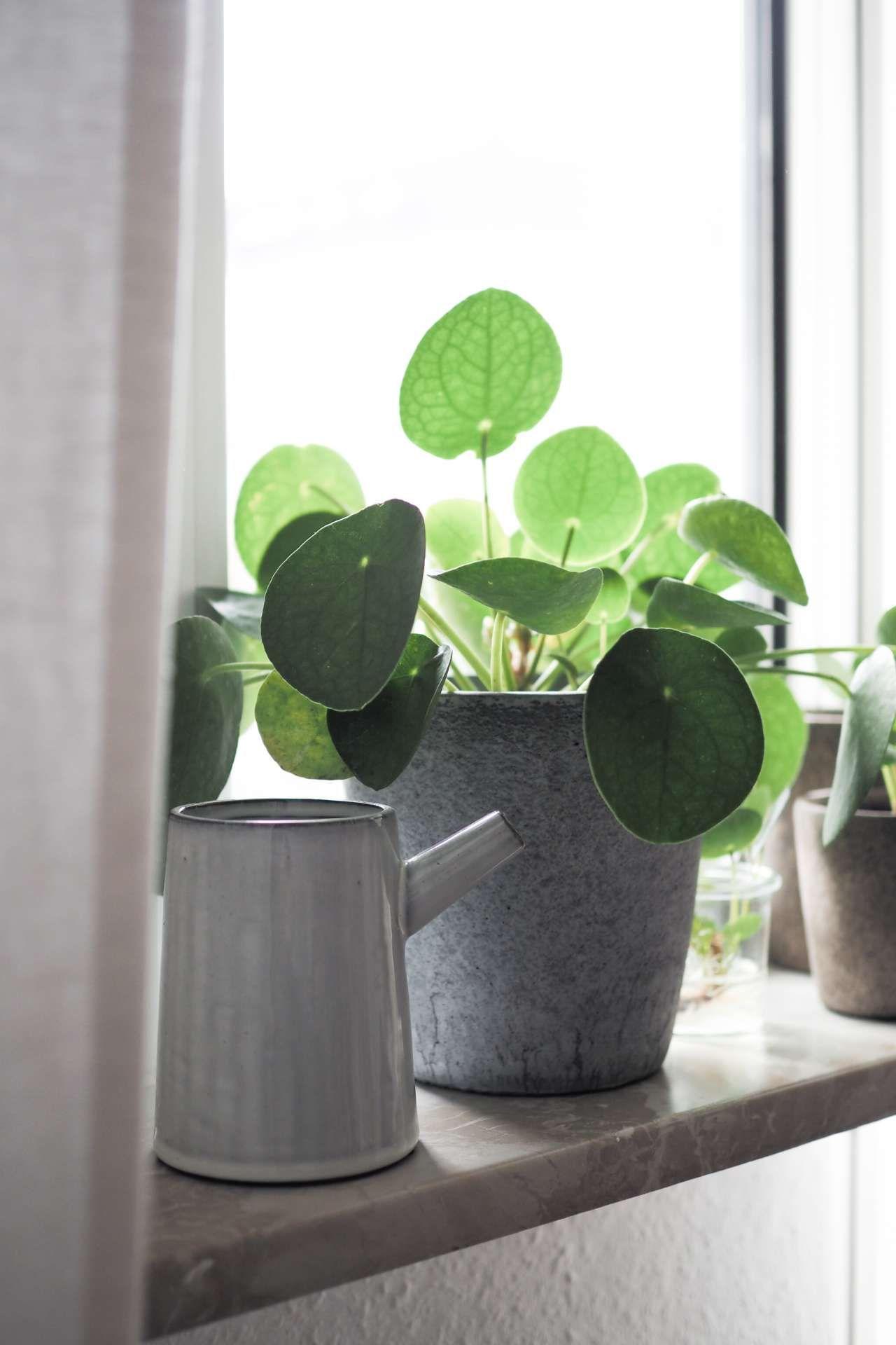 Urban jungle bloggers new beginnings succulents plants for Zimmerpflanzen wohnzimmer