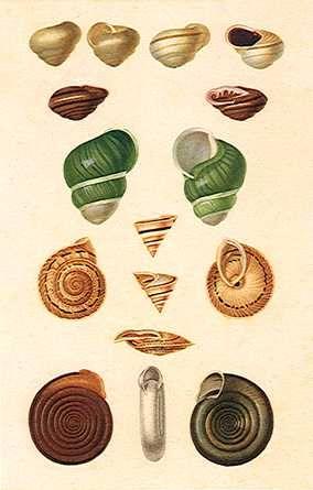 Vintage Seashells.